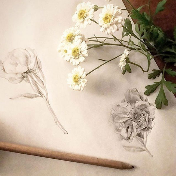 pencil illustration flowers
